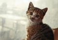 Lagi, Dua Kucing Peliharaan Positif Terjangkit COVID-19