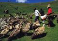 Jenazah Dimakan Burung, Begini Ritual Pemakaman Langit di Tibet