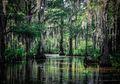 Area Lahan Basah Dunia Musnah Tiga Kali Lebih Cepat Dibanding Hutan