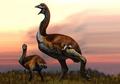 Sebesar Dinosaurus, Penemuan Burung Gajah Terbesar dari Madagaskar