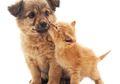 Bukan Musuh Bebuyutan, Anjing dan Kucing Dapat Hidup Berdampingan