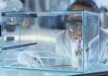 Sering Lihat Tikus Jadi Bahan Percobaan? Inilah 5 Alasannya