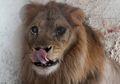 Kekurangan Gizi, Hewan-hewan di Kebun Binatang Akhirnya Diselamatkan