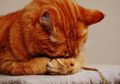 Kejam! Seorang Laki-Laki Tega Perkosa Kucing, Begini Nasib Si Kucing