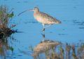 Keberadaan Burung Air di Indonesia Semakin Terancam, Apa Penyebabnya?