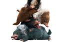 Di Fantastic Beasts 2, Satwa Ajaib Apa Lagi yang Akan Muncul?