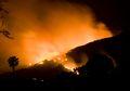 Kebakaran Besar di Hutan Califiornia: 56 Tewas dan Ratusan Orang Hilang