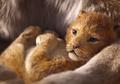 Ditayangkan Tahun Depan, Trailer Perdana Lion King Sudah Rilis, lo!