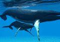 Hewan Laut Mampu Serap Karbon, Bisakah Mengatasi Perubahan Iklim?
