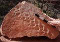 Puluhan Jejak Reptil dari Ratusan Tahun Lalu Ditemukan di Grand Canyon