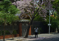 Penampakan Kota Surabaya Penuh Bunga Bermekaran, Mirip Kota Apa Ya?