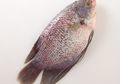 Tips Menghilangkan Bau Lumpur Pada Ikan Gurame, Tiru Cara Ala Restoran Ini