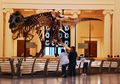 Ornamen Tulang Kepala dan Rahasia Mengapa Dinosaurus Berukuran Raksasa