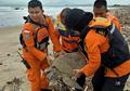 Selamatkan Penyu yang Terdampar Saat Tsunami Selat Sunda, Tim SAR: Semua Nyawa Berharga