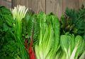 Rajin Konsumsi Sayuran Hijau, Bisa Mencegah Penumpukan Lemak Hati