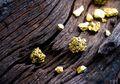 Bakteri Pendaur Ulang Emas, Temuan  yang Bisa Selamatkan Lingkungan