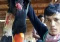 Video Pembantaian Burung Rangkong Viral di Media Sosial, Ternyata Untuk Dikonsumsi Oleh Pelaku dan Temannya