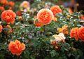 10 Barang Ini Bisa Dipakai Menyuburkan Tanaman di Taman Rumahmu