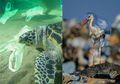 Plis Jangan Buang Sampah Sembarangan! Hewan Laut Menganggap Plastik Adalah Makanan Karena Bentuk dan Baunya Mirip