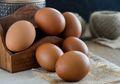 Dimodifikasi, Ayam Ini Hasilkan Telur dengan Kandungan Obat Antikanker