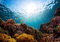 Coral Bleaching, Fenomena Hilangnya Warna Indah Terumbu Karang