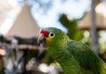 Urban Jungle, Ketika Perkotaan Menjadi Rumah Baru Bagi Binatang