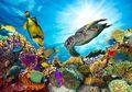 Coral Triangle, Ibu Kota Kehidupan Para Makhluk Laut di Asia