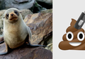 Mengendap Setahun Di Kotoran Beku Singa Laut, USB Berisi Foto Ini Masih Berfungsi