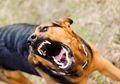 Belasan Warga Diserang Anjing Gila, Kolaka Utara Siaga 1 Rabies