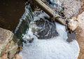 Warga Dunia Waspadalah! Sungai Kita Tercemar oleh Antiobiotik Parah