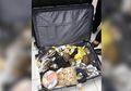 1.500 Kura-kura Diselundupkan Lewat Koper, Ditemukan di Filipina