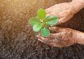 Gemar Berkebun? Lima Manfaat Kesehatan Ini Akan Mendatangi Anda
