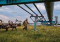 Kisah Suku Nenet yang Hidup Di Tepi Dunia dan Terancam Perubahan Iklim