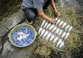 Di Vietnam, Daging Tikus Menjadi Makanan Populer yang Digilai