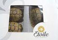 Penyelundupan Kura-kura di Pesawat, Kali Ini Ditempatkan Dalam Kotak Roti