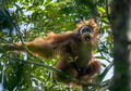 Ilmuwan: Hewan di Bumi Sulit Beradaptasi dengan Perubahan Iklim
