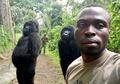 Ketika Dua Gorila Ikut Selfie Bersama Penjaga Taman Nasional