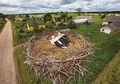 Misteri Alam yang Belum Terungkap: Bisakah Burung Mendeteksi Gempa?