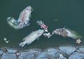 Kadar Oksigen di Laut Menurun Akibat Perubahan Iklim, Ikan Terancam Punah