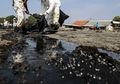 Tumpahan Minyak, Bencana Industri yang Sangat Merugikan Manusia dan Alam