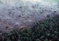 Hutan Amazon Terbakar, Asap Hitam Terlihat dari Luar Angkasa