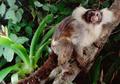 Bagaimana Dampak Kebakaran Hutan Amazon Terhadap Satwa Liar yang Tinggal di Sana?