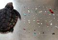 Seekor Penyu Ditemukan Mati dengan Ratusan Plastik di Perutnya