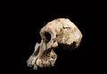 Penemuan Tengkorak Tanpa Rahang Ini Ubah Pemahaman Evolusi Manusia