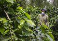 Kopi Kang dan Budidaya Maggot, Upaya Unik Warga Jawa Barat Jaga Kelestarian Lingkungan