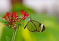Inilah 6 Fakta Kupu-kupu yang Mungkin Belum Kamu Ketahui