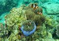 Pertemanan Hewan Laut di Dunia Nyata