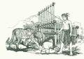 I Sadia dan Harimau