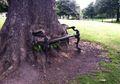 Pohon Pemakan Kursi di Irlandia