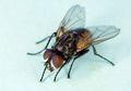 Merasa Sulit Memukul Lalat? Ternyata Inilah Sebabnya